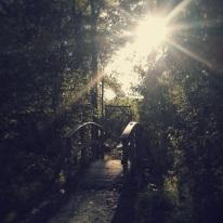 I took this photo while hiking